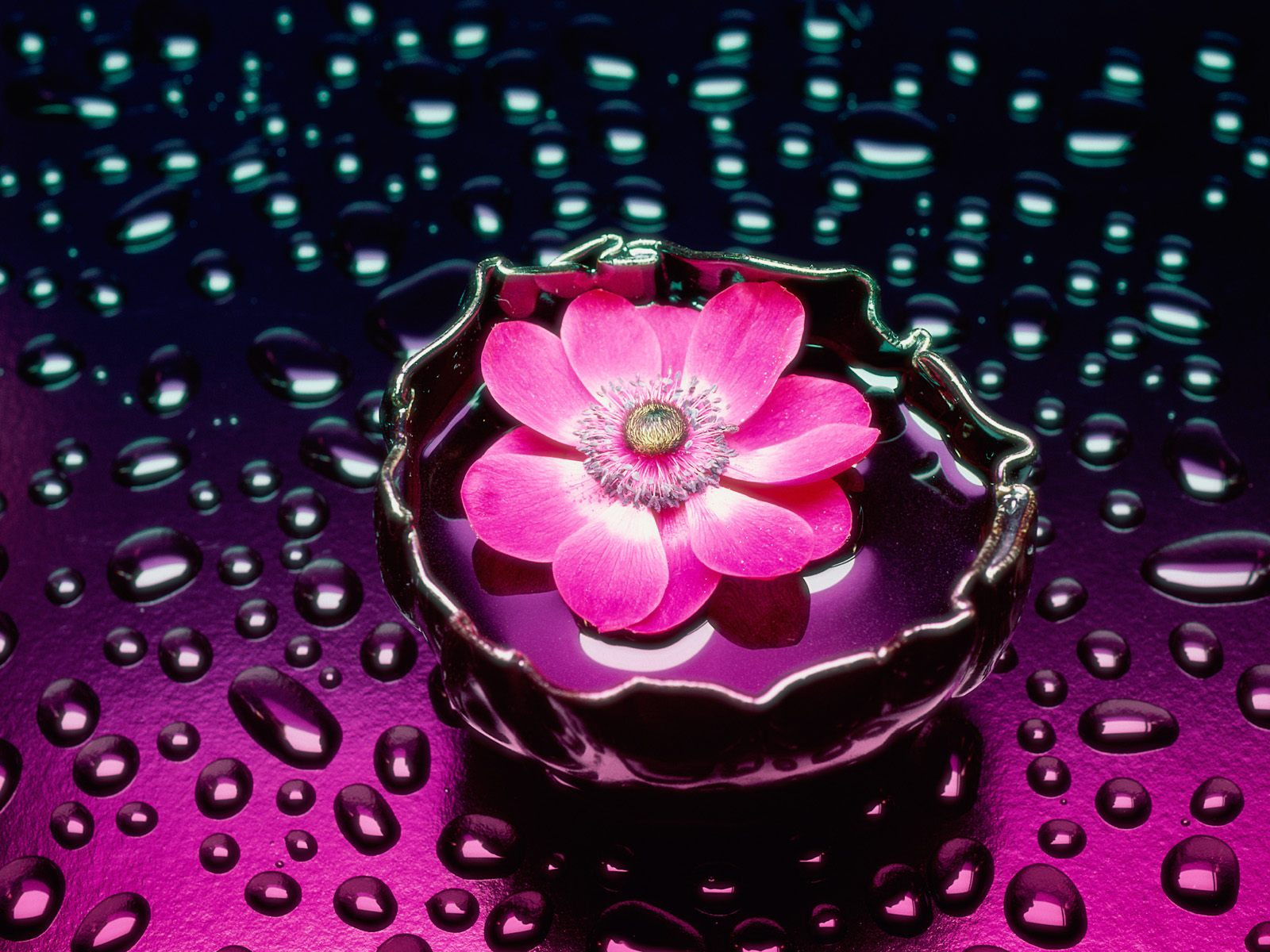 Beautiful Flowers Wallpapers Simple Pics